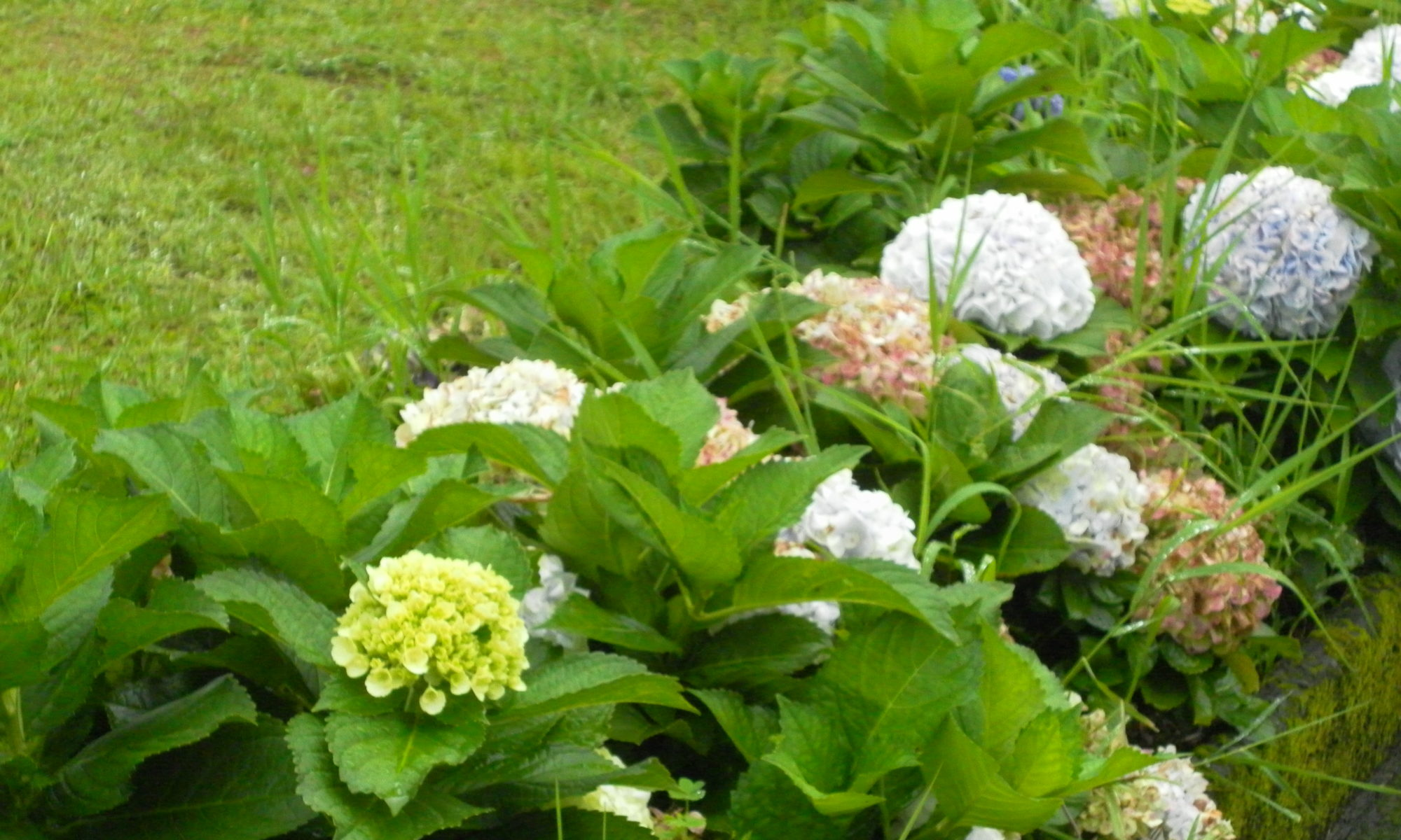 www.jardin-kreol.com